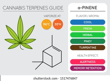 Cannabis Terpene Guide Information Chart. Aroma and Flavor with Health Benefits and Vaporize Temperature. Vector.