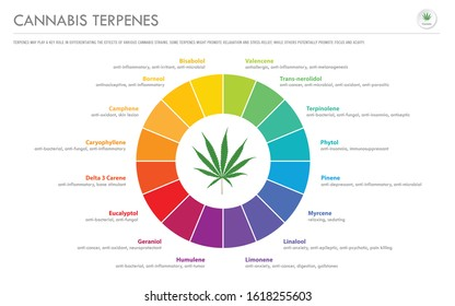Cannabis Terpenes horizontal business infographic illustration about cannabis as herbal alternative medicine and chemical therapy, healthcare and medical science vector.