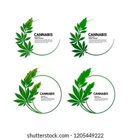 Cannabis vector illustration.