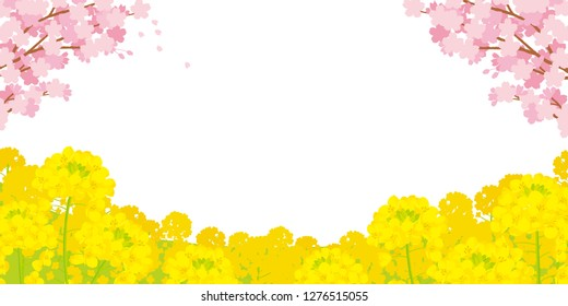 Canola flower and Cherry Blossoms.Spring landscape of illustrations