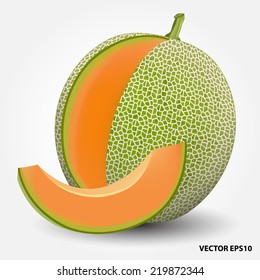 cantaloupe melon.vector illustration