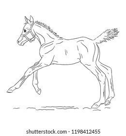 Cantering foal on white background, vector illustration.