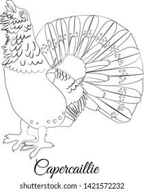 Capercaillie bird cartoon coloring vector illustration