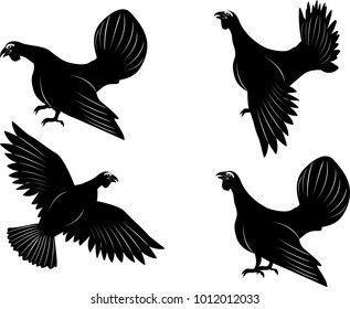 capercaillie birds vector set, isolated on white vector.