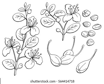 Capers graphic black white isolated sketch illustration vector