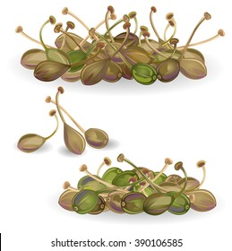 Capers. Hand drawn vector illustration of capers (Capparis spinosa) on white background.