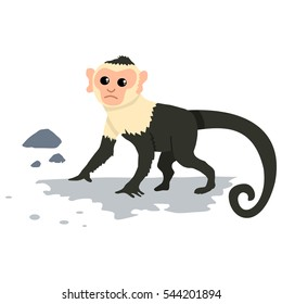 Capuchin monkey. Cartoon vector illustration of isolated on white background.
