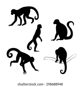 Capuchin monkey vector icons and silhouettes. Set of illustrations in different poses.
