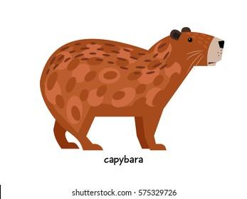 Capybara - herbivore semi-aquatic mammals