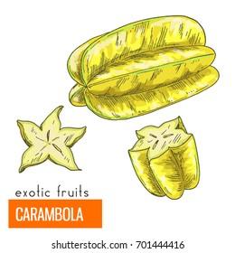 Carambola. Full color realistic hand drawn vector illustration.