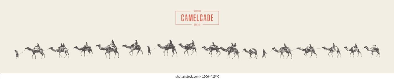 Caravan of camels in desert. Hand drawn vector illustration, sketch