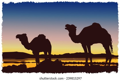 A caravan of camels in the desert at sunset.