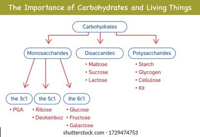Carbohydrates are sugar and are divided into three as monosaccharides, disaccharides and polysaccharides according to the amount of sugar in their structure.