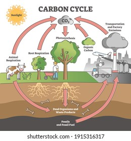 Carbon cycle with CO2 dioxide gas exchange process scheme outline concept. Photosynthesis, respiration and transport or factory emissions as biochemical system labeled explanation vector illustration.