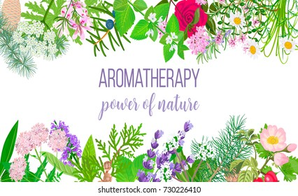 Card with essential oil plants. Frame Ornament with text aromatherapy. Power of nature. Peppermint, lavender, sage, melissa, Rose, Chamomile, oregano etc. For cosmetics, spa, health care, perfumery