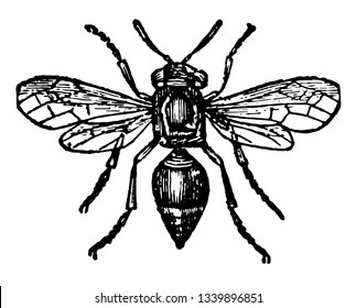 Card Making Wasp where the card making wasp is almost superior to the bee vintage line drawing or engraving illustration.