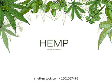 Card, template, banner hand drawing of leaves of hemp cannabis  branches. Color green graphics, vector illustration.