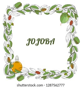 Card, template with hand drawn leaves, branch and flowers jojoba. Jojoba essential oil. Wreath with leaves and twigs.  Vector black and white, color illustration.