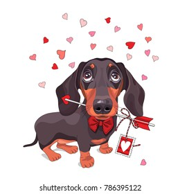 Card of a Valentine's Day. Dachshund Dog in a bow tie and with love arrow. Vector illustration.