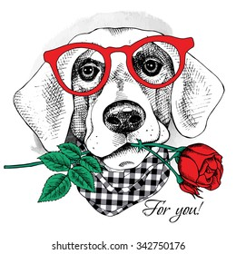 Card of Valentine's Day. Dog portrait in glasses with red rose. Vector illustration.