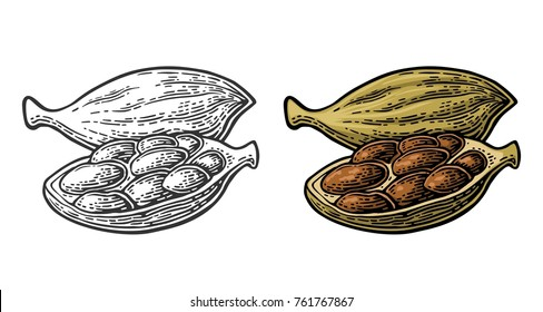 Cardamom spice fruit with seed. Isolated on white background. Fruit whole and opened. Vector color and monochrome vintage engraving illustration. Hand drawn design element for label and poster
