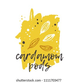 Cardamon concept design. Hand drawn vector illustration. Herbs and spices. Can be used for farmers market, food festival, menu, cafe, restaurant, bar, poster, banner, emblem, sticker, placard.