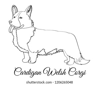 Cardigan Welsh corgi dog coloring