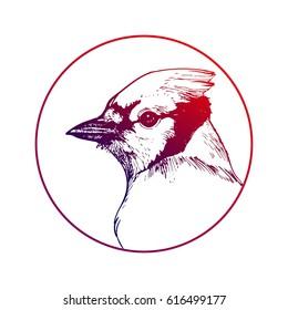 Cardinal bird head line art portrait hand drawn vector illustration