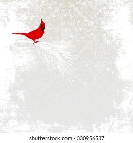 Cardinal bird on winter background