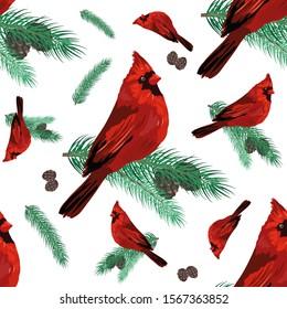 Cardinal bird sitting on fir-tree branch. Winter holidays theme illustration. Vector seamless pattern