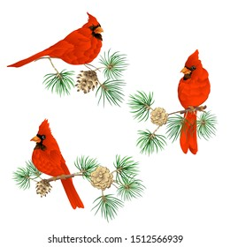 Cardinal bird - a symbol of Christmas. Christmas wreath of winter plants. Element for design. Colored vector illustration. Isolated on white background.