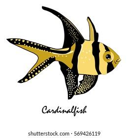 Cardinalfish Saltwater Aquarium Fish vector illustration