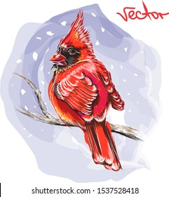 Cardinals bird is sitting on a branch. Hand-drawn vector illustration. Bright and colorful illustration on the New Year theme. Illustration with a red bird sitting on a branch during a snowfall.