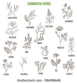 Carminative herbs. Hand drawn vector set of medicinal plants