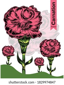 Carnation Flower. a flower that symbolizes the month of january.