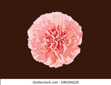 carnation flower vector art design