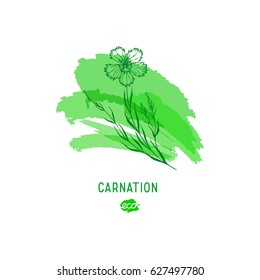 Carnation flower vector illustration. Provence wildflowers. Medicinal herb. Hand drawn herbs icon on a green watercolor spot, outline.