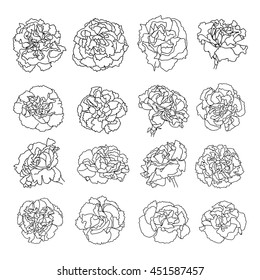 Carnation flowers collection.Vector illustration.