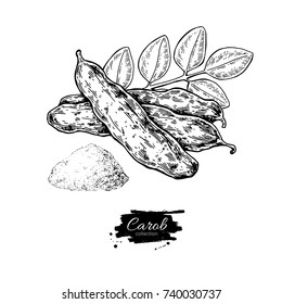 Carob vector superfood drawing. Isolated hand drawn  illustration on white background. Organic healthy food. Great for banner, poster, label