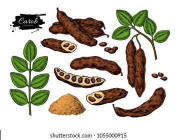 Carob vector superfood drawing set. Isolated hand drawn  illustration on white background. Organic healthy food. Great for banner, poster, label
