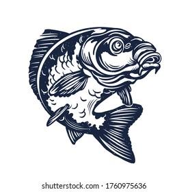 Carp Fish Vector Illustration.Common Carp Illustration. Isolated on white background.