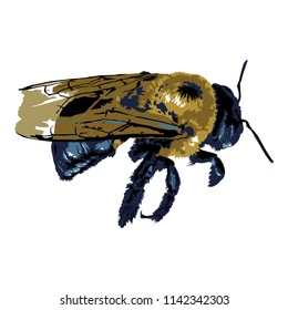 Carpenter Bee, colored - Vector