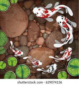 carps koi fish underwater pond vector illustration