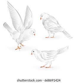 Hand Drawing Pigeon White Images Stock Photos Vectors Shutterstock