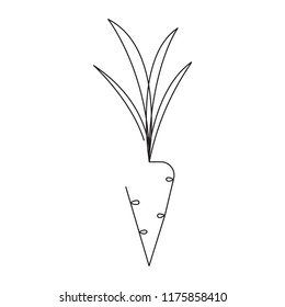 Carrot editable continuous line vector illustration - single line drawing of ripe vegetable isolated on white background for organic eco food shop logo or decoration.