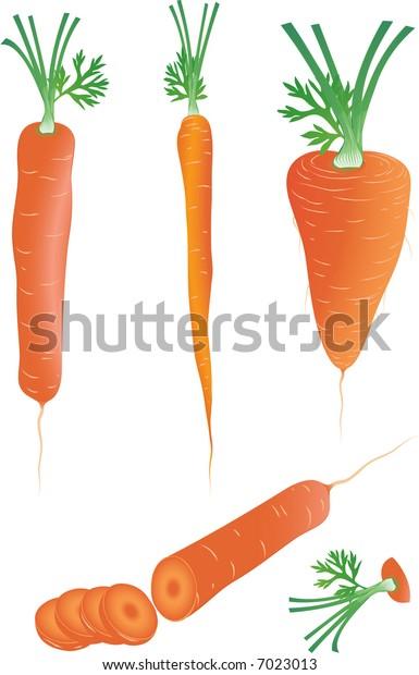 Carrot. Vector illustration.
