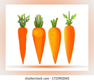 Carrots Illustration. Carrot icon. Carrot. white background. Fresh carrot. Freshness, Single, Carrot vector, Organic food, Vegetable. Healthy food. Red, Orange, Vegetarian. Closeup. Agriculture.