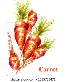 Carrots isolated Vector watercolor. Fresh spring veggies illustrations