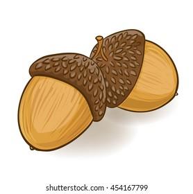 cartoon acorns on white. vector illustration