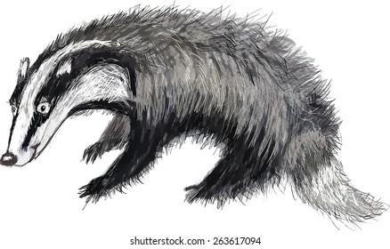 Cartoon animal badger. Watercolor hand drawn vector. Illustration for the children